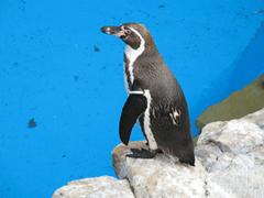ペンギンは会場にきません