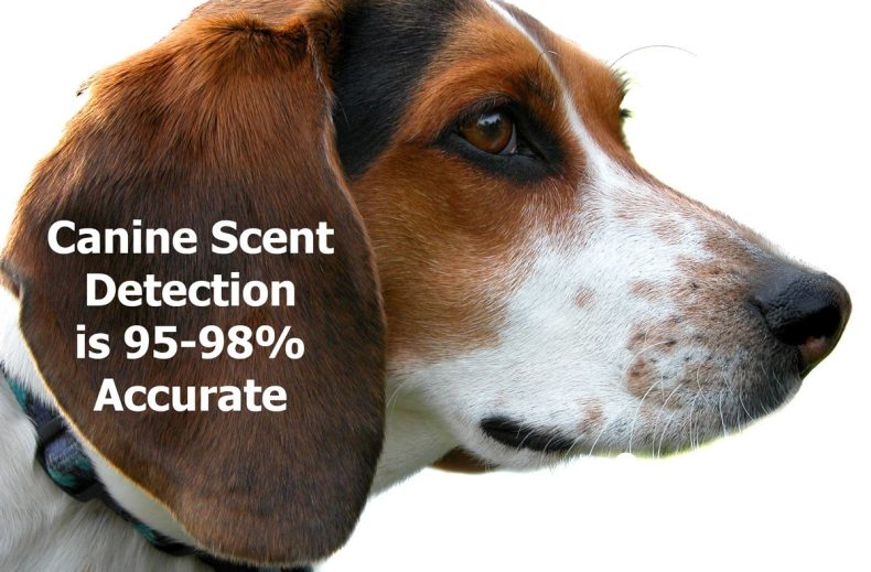 Canine Bed Bug Detection is 95-98% accurate