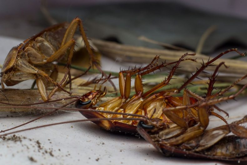 Cockroaches can survive lots of things, but a nuclear blast is not one of them