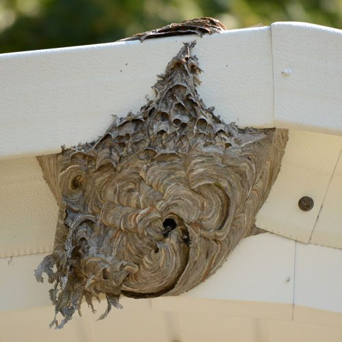 Bee hive on house