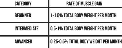 Muscle gain maximum rate