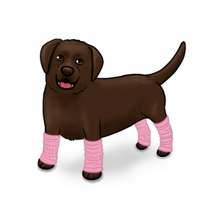 Lab in Legwarmers