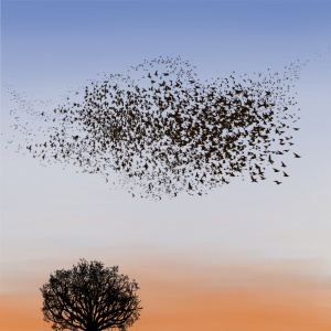 birds, digital illustration, murmuration