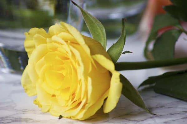 flower flourish