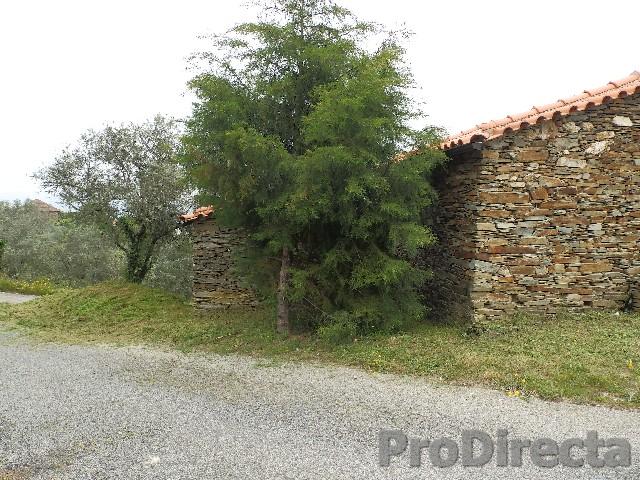 Coja property