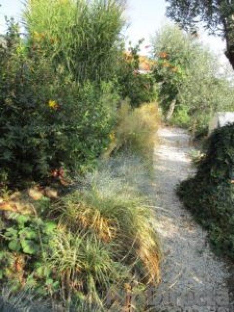 35. Garden