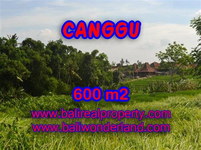 Beautiful Land for sale in Bali, paddy view in Canggu Bali – TJCG130