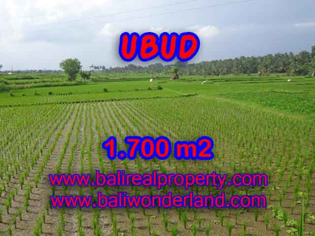 Magnificent Property in Bali for sale, land in Ubud Bali for sale – TJUB398