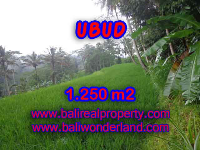 Fantastic Land for sale in Ubud Bali, Ricefield view by valley in Ubud Tampak siring– TJUB405