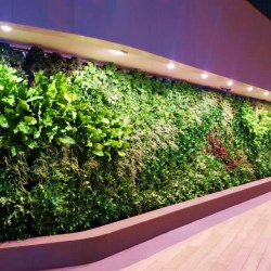 Example of Office Garden Walls in Trendy Office Space