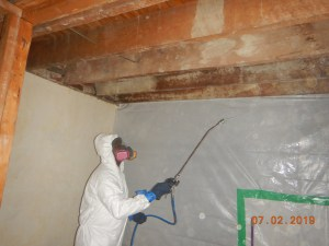 Cleaning Mold Growth