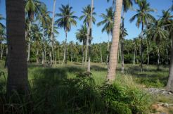 15 Rai of land for sale in Bophut, Koh Samui