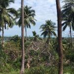 Land with stunning views for sale, Maenam hillside, Koh Samui