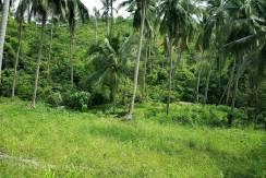 Sea View Land Thong Krut Koh Samui