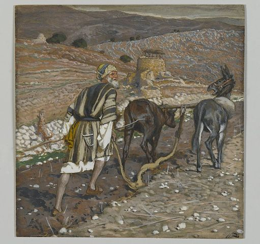 Colored painting of a man in ancient Jewish dress ploughing rocky soil with 2 mules. Stone wall and hills in background. .