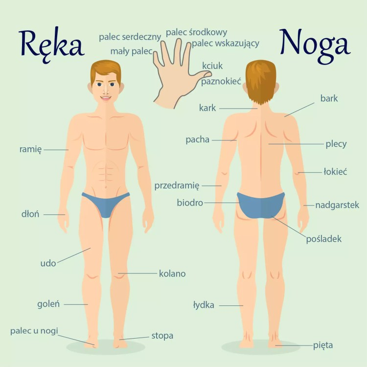 Польские слова на тему Рука и нога