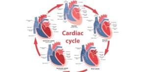 Mcq_mini3 Cardiac Output  ProProfs Quiz