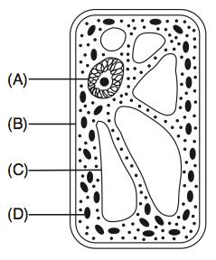 27 The Diagram Below Represents A Portion Of A Dna