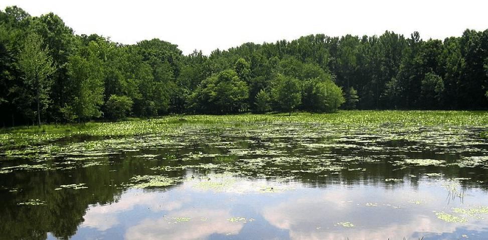 Ecosystem in der Natur und in der Wirtschaft