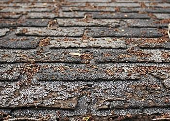 Roof repair needed for missing, cracked, or curled shingles