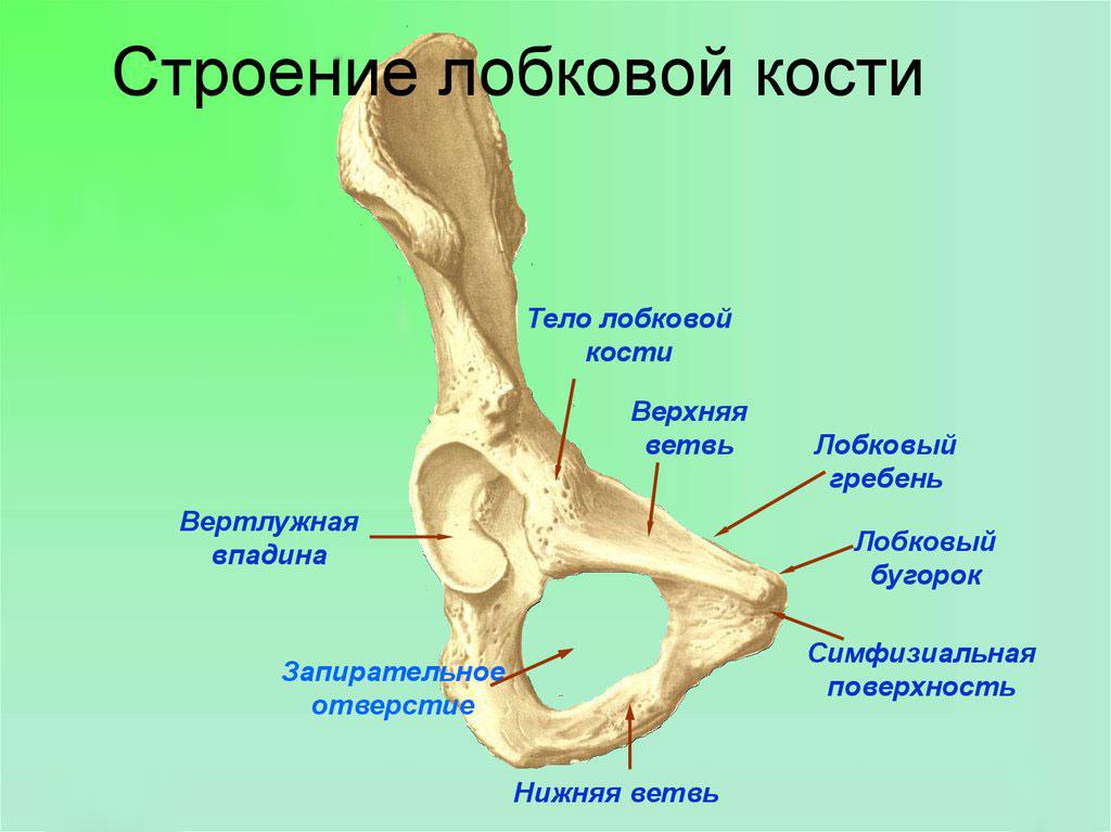 Смещение таза после родов. Причины и лечение боли тазовых костей после родов