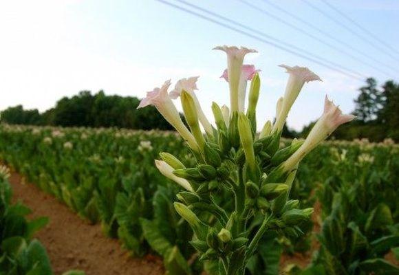 फूलों की झाड़ियों