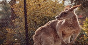 Read more about the article Pros and Cons of Zoos