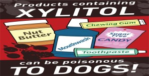 Pros and Cons of Xylitol