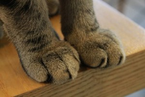 Pros and Cons of Declawing Cats
