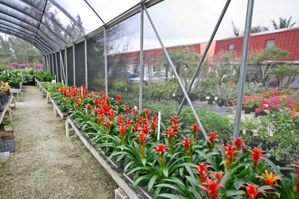 gardens nursery bahamas landscaping