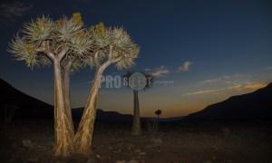 Quiver trees Biedouw valley