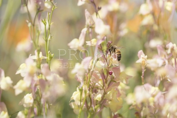 Bee gathering pollen from indigenous flowers