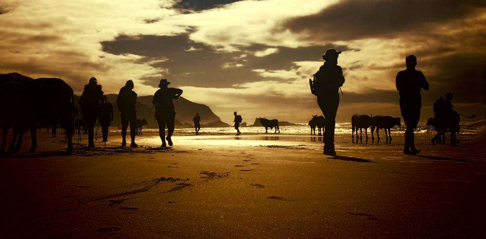 Transkei hikers and cattle_travel photography