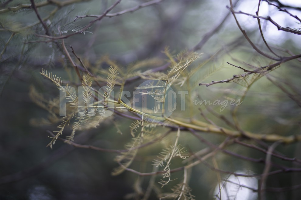 Branches and leaves | ProSelect-images