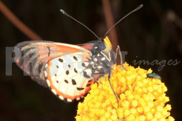 Butterfly and bug on yellow flower | ProSelect-images