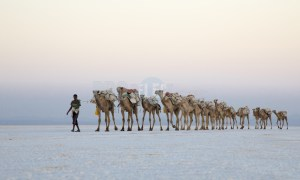 Camel Caravans North Africa | ProSelect-images
