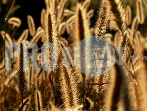Cluster Grass | ProSelect-images