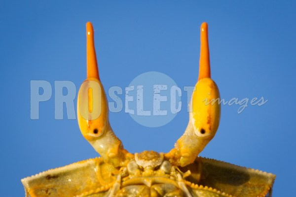 Crab and blue skyes | ProSelect-images