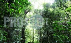 Dlinza Forest Eshowe | ProSelect-images