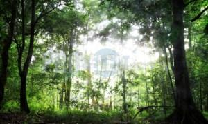 Eshowe Dlinza forest   ProSelect-images