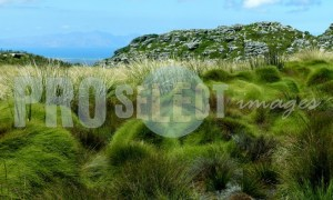 Grass landscape Table Mountain | ProSelect-images