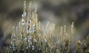 Grass of the field | ProSelect-images
