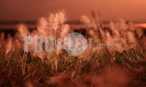 Grass Rietvlei Nature Reserve | ProSelect-images