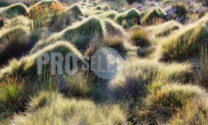 Grass Variety Western Cape | ProSelect-images