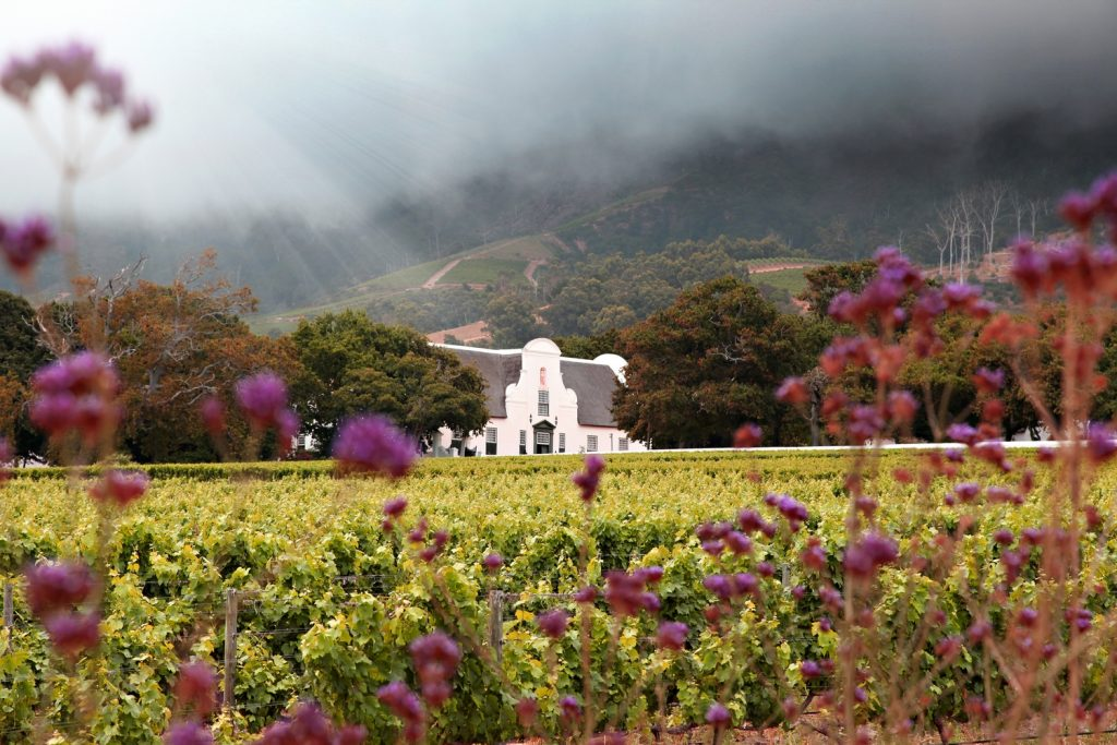 Groot Constantia | ProSelect-images