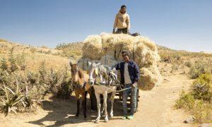 Horses and cart Mk'ele Ethiopia | ProSelect-images