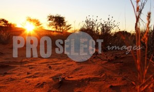 Kalahari desert sunset | ProSelect-images