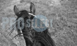 Rider on horse Argentina | ProSelect-images