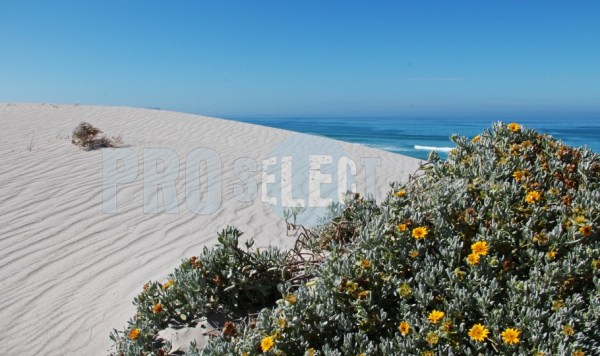 Sand dunes and ocean | ProSelect-images