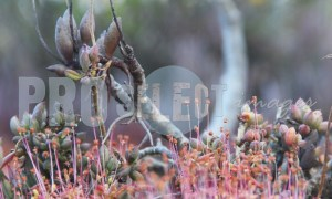 Succulent and dead flowers | ProSelect-images